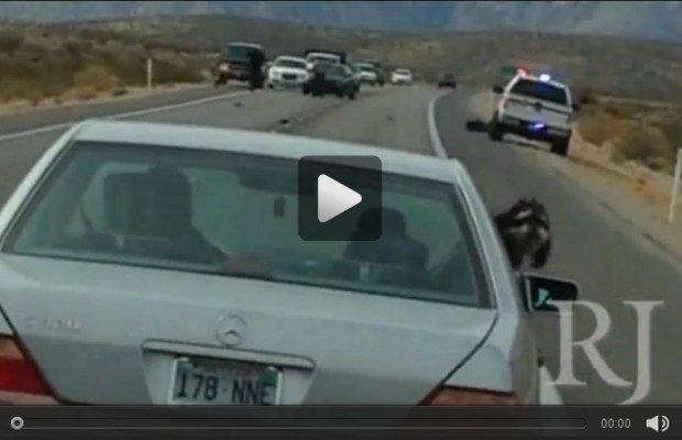 Last moments of man killed by police at Red Rock captured on video.